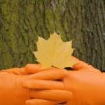 To lock hands, Orange glove, green tree, yellow leaf, autumn — Stock Photo #13341824