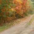 Road in the autumn forest — Stock Photo #13341994
