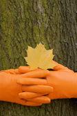 To lock hands, Orange glove, green tree, yellow leaf, autumn — Stock Photo