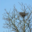 Bird nest in the tree on blue sky — Stock Photo