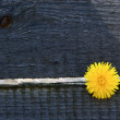 Alone Dandelion in wooden background — Stock Photo
