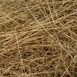 Stock Photo: Background of hay