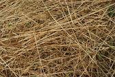 Background of hay — Stock Photo