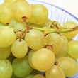 Fresh grape fruits — Stock Photo