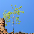 Alone tree on the wall - blue sky — Stock Photo