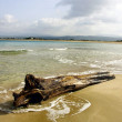 Felled tree on the beach - Stock Photo