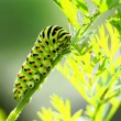 Green caterpillar on natural background — Stockfoto