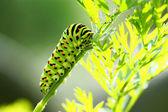 Doğal zemin üzerine yeşil tırtıl — Stok fotoğraf