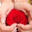 Woman hands heart with rose petals — Stock Photo #14041417