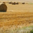 Stock Photo: Rolled straw after harvesting - wheat field