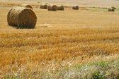 Rolou palha depois da colheita - campo de trigo — Fotografia Stock