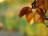 Autumn tree leaf and lake water — Stock Photo