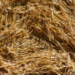 Rolled straw after harvesting - background — Stock Photo