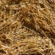 Rolled straw after harvesting - background — Foto de Stock