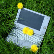 Laptop outdoors — Stock Photo