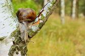 two garden snail — Foto Stock