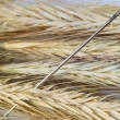 Needle in a haystack. — Stock Photo #16330729