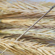 Needle in a haystack. - Stock Photo