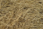 Texture background of hay — Stock Photo