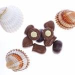 Chocolate pralines and shells — Stock Photo #18123627
