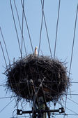 Stork on nest on the pole over blue sky — Foto Stock
