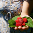 Forest raspberry on the woman hand — Stock Photo