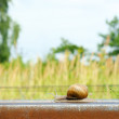 Snail on railway rail — Stok Fotoğraf #18186671