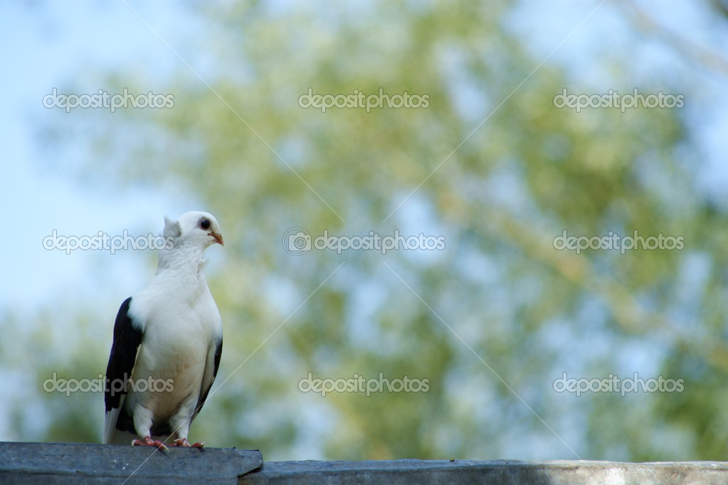 Doves - white - on the sky background — Stock Photo #18186591