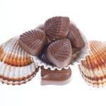 Chocolate pralines and shells — Stock Photo #18241679