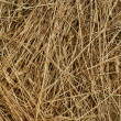 Texture background of hay - Stock Photo