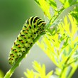 Green caterpillar — Stock Photo