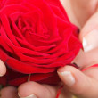 Woman hands with rose petals — Stock Photo #19398645