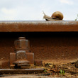 Snail on railway rail — Stok Fotoğraf #21265633
