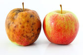 Apple spoiled on white background Healthy and rotten apples — Stock Photo