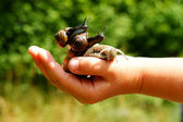 Garden snails — Stock Photo