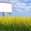 Blank white billboard in a rapeseed field — Stock Photo