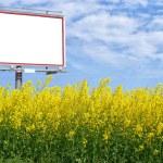 lege witte billboard in een veld van koolzaad — Stockfoto