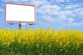 Blank white billboard in a rapeseed field — Stock fotografie