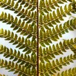 Detail of green ferns as background — Stock Photo #22135273