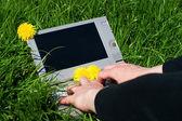 Žena psaní na notebooku venku na louce — Stock fotografie