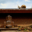 Snail on railway rail — Stok Fotoğraf #22429525