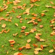 Stock Photo: Autumn leaves on green grass