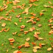 Autumn leaves on green grass — Stock Photo
