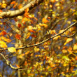 Bright autumn leaves in the natural environment — Stock Photo #22814972