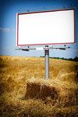 Blank white billboard in a wheat field — Stock Photo