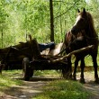 Stock Photo: Old-style horse wagon
