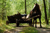 Old-style horse wagon — Stock Photo