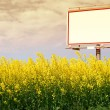 Blank white billboard in a rapeseed field - Stock Photo