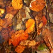 Colorful autumn leaves as background - Stock Photo