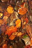 Kleurrijke herfstbladeren als achtergrond — Stockfoto
